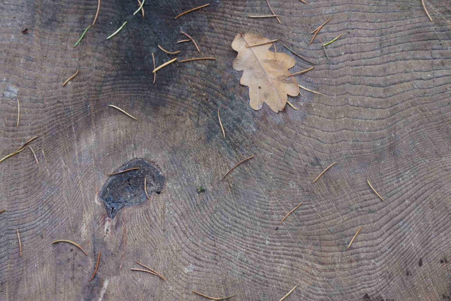 Trace d'automne