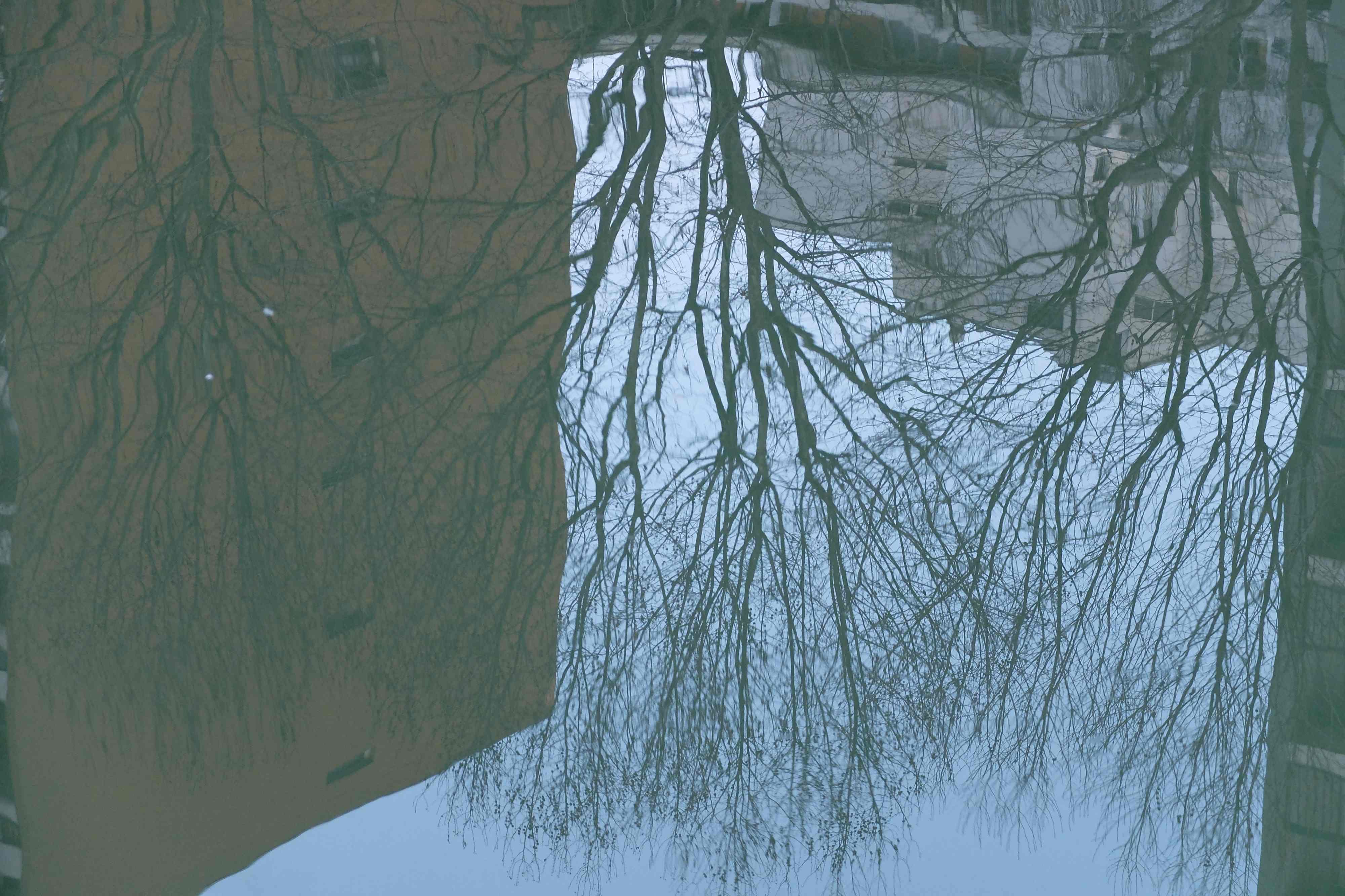 Fascination pour les arbres reflets