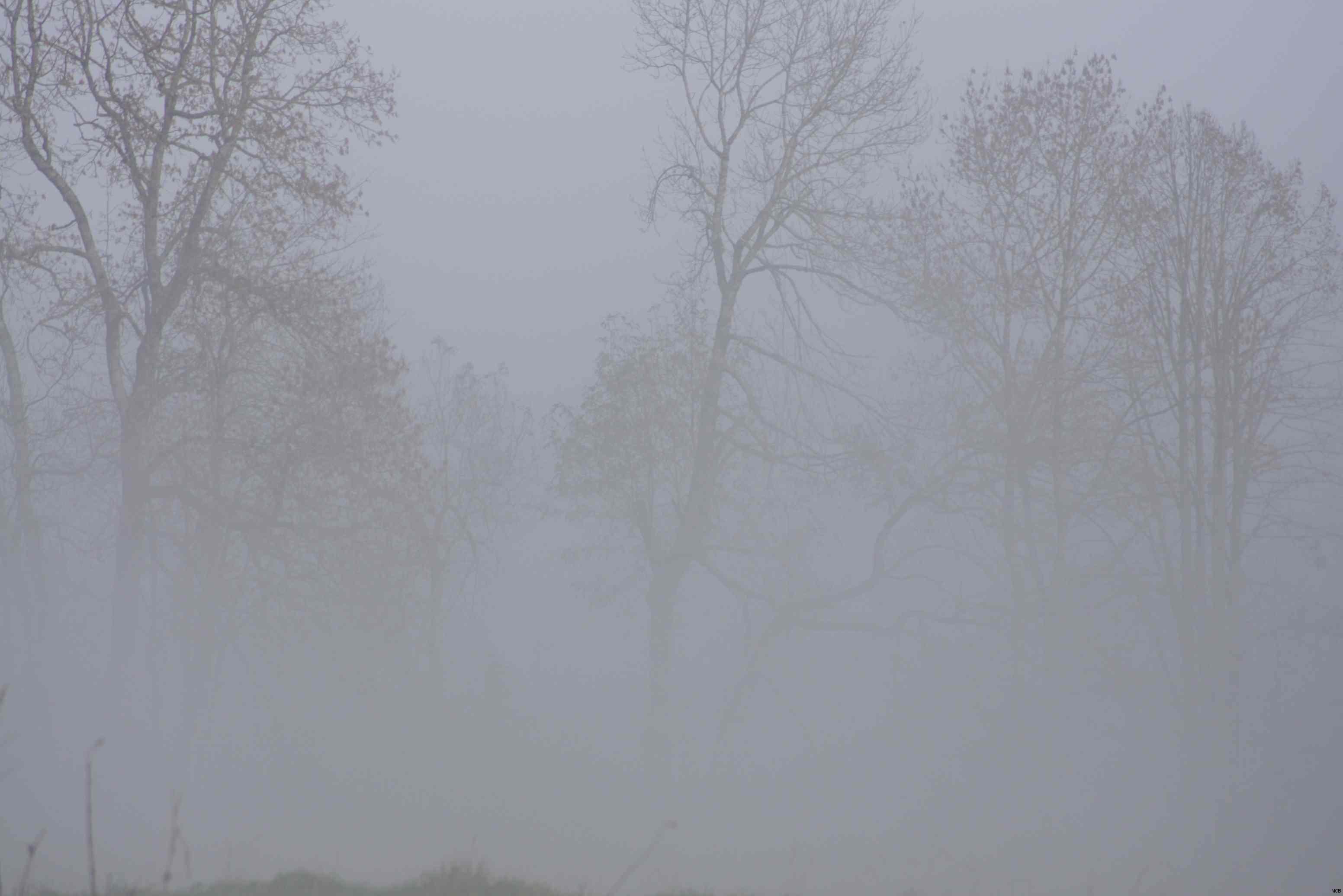 Brouillard jurassien