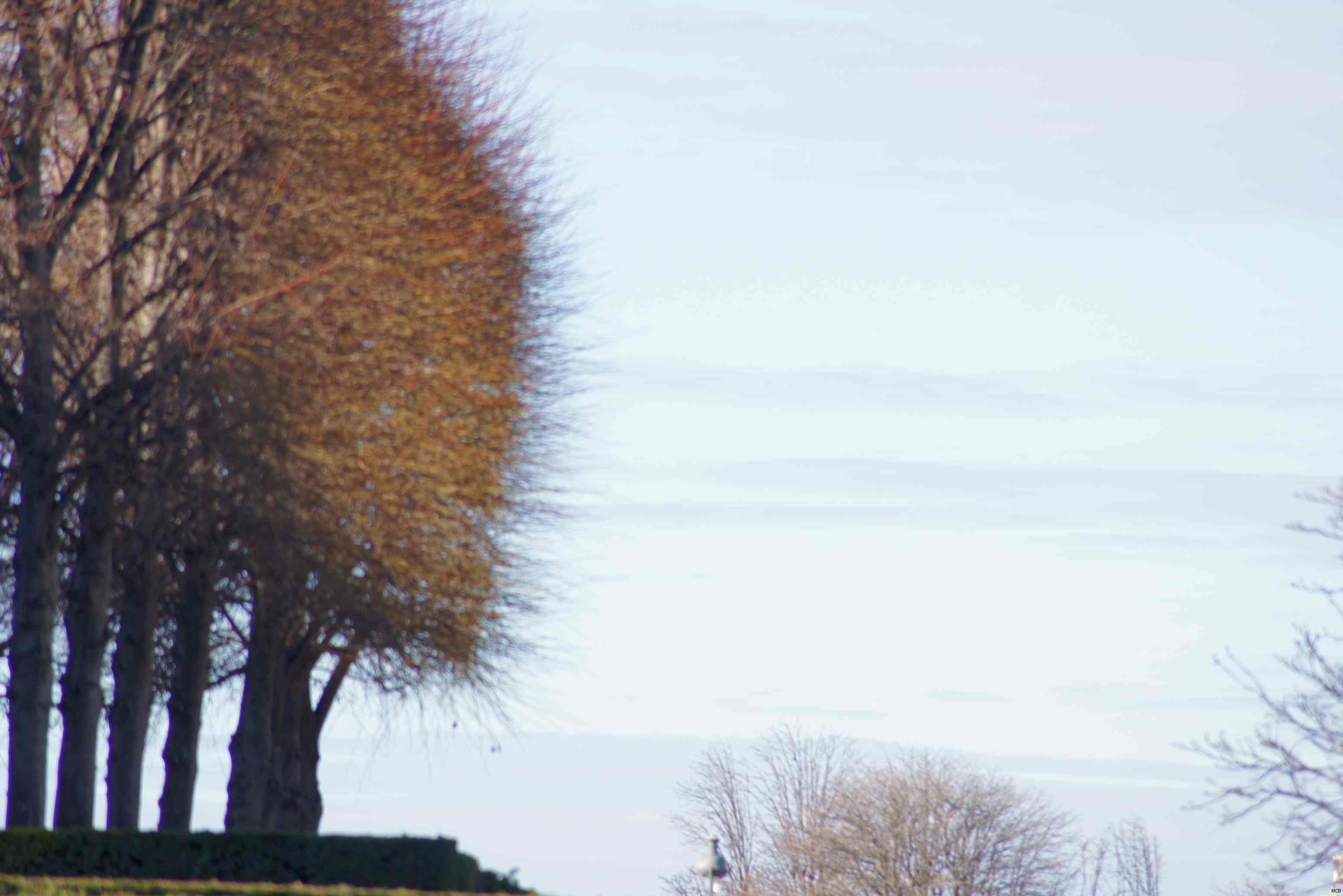 Les Tuileries dépouillées