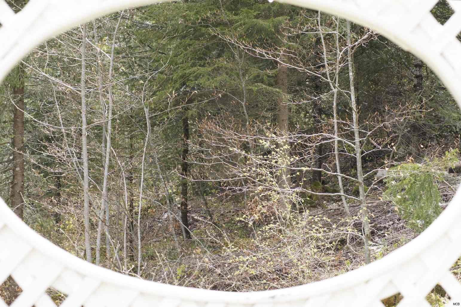 Forêt entre-aperçue