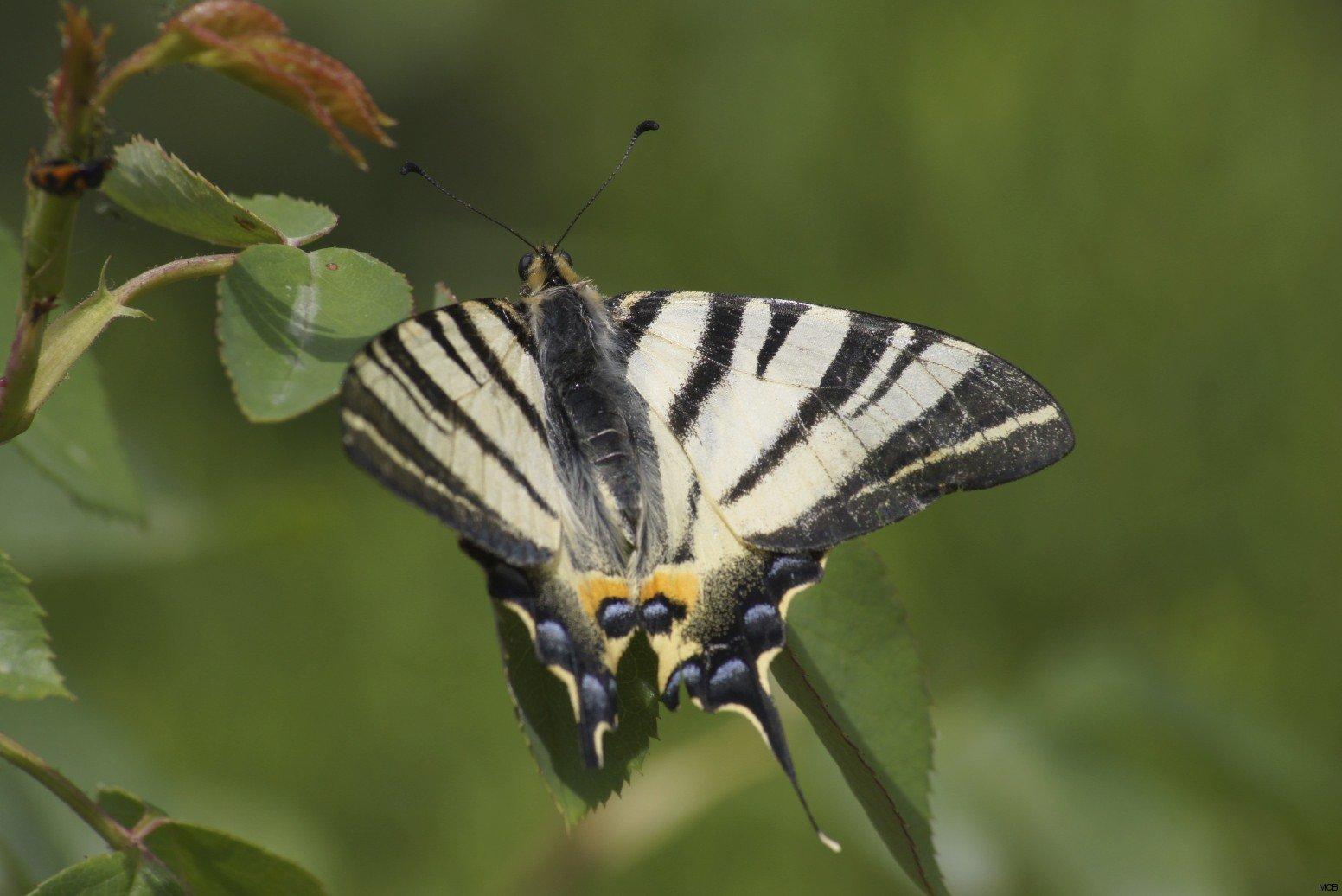 Papillon dans cimetière