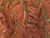 Roux d'automne