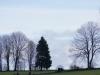 Arbres jurassiens sur ciel blanc
