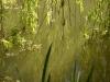 Eaux vertes du printemps