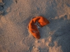 Pelure d'orange échouée