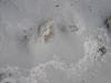 Concentré blanc de sable