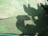 Jeu d'ombre (3)