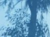 Ombre d'arbre