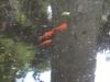 Poissons dans arbre