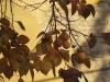 Tirana DSC07806.jpg