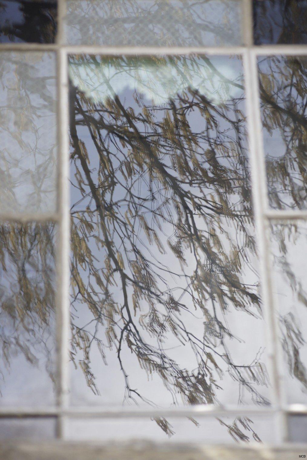 Fenêtre dans arbre