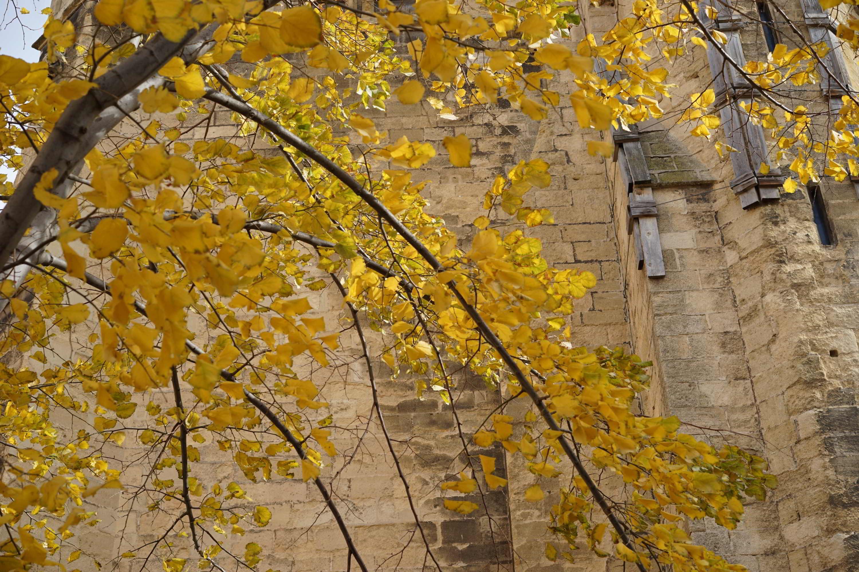 Automne sur cathédrale