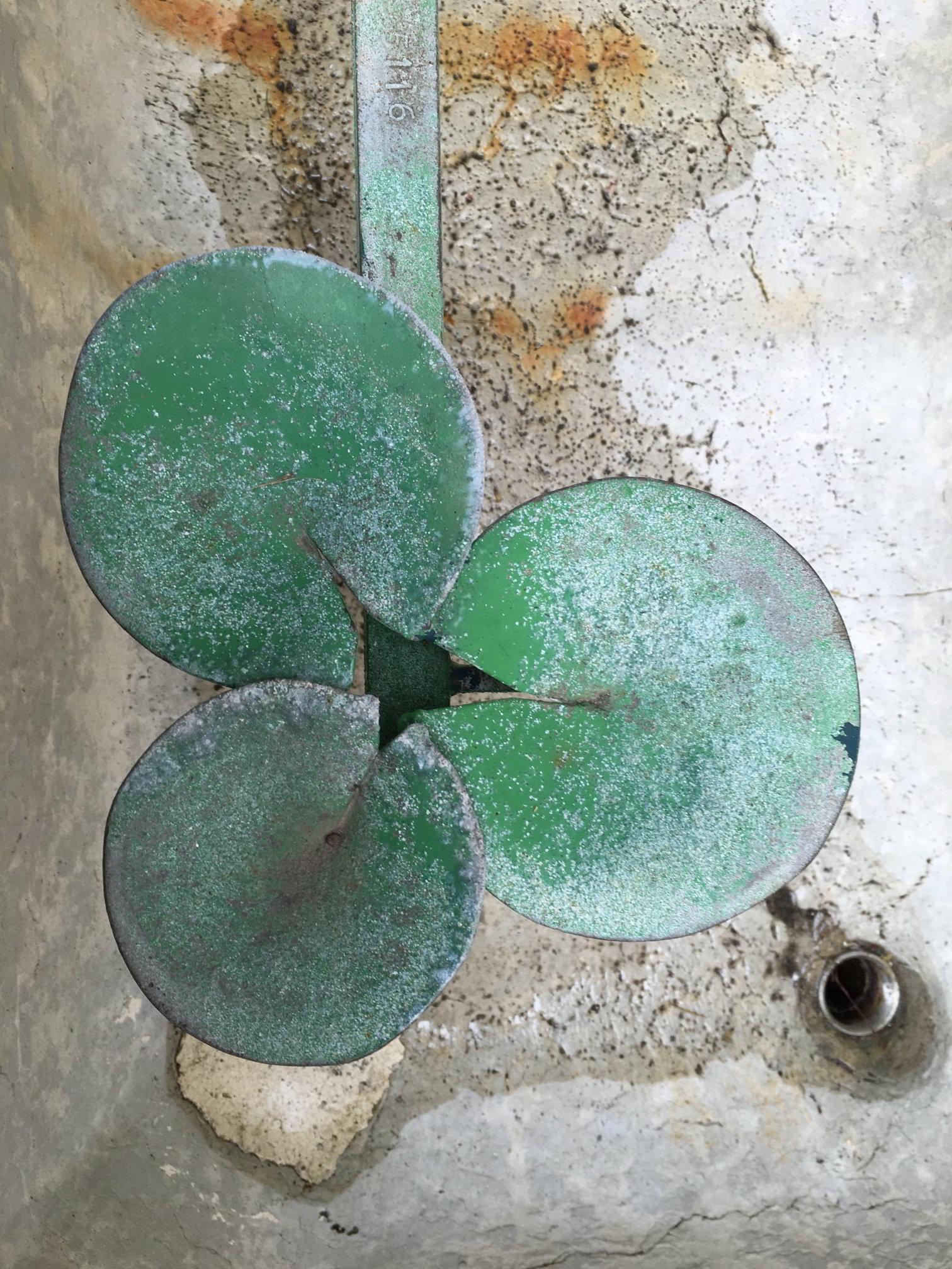 Pétales de fontaine