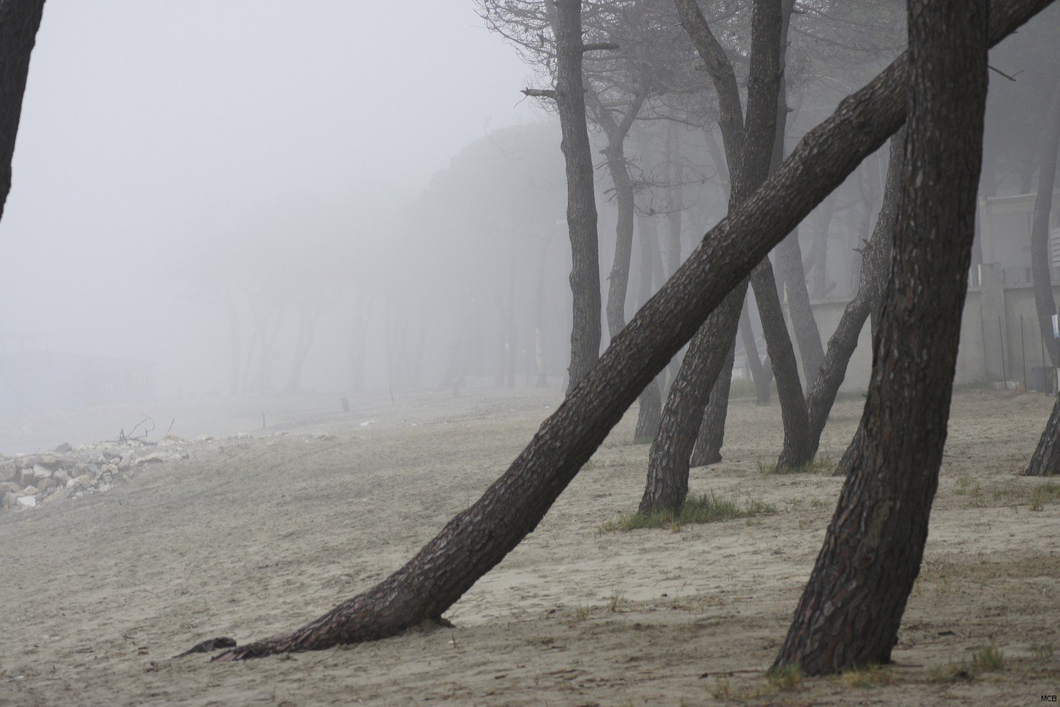 Brouillard sur plage