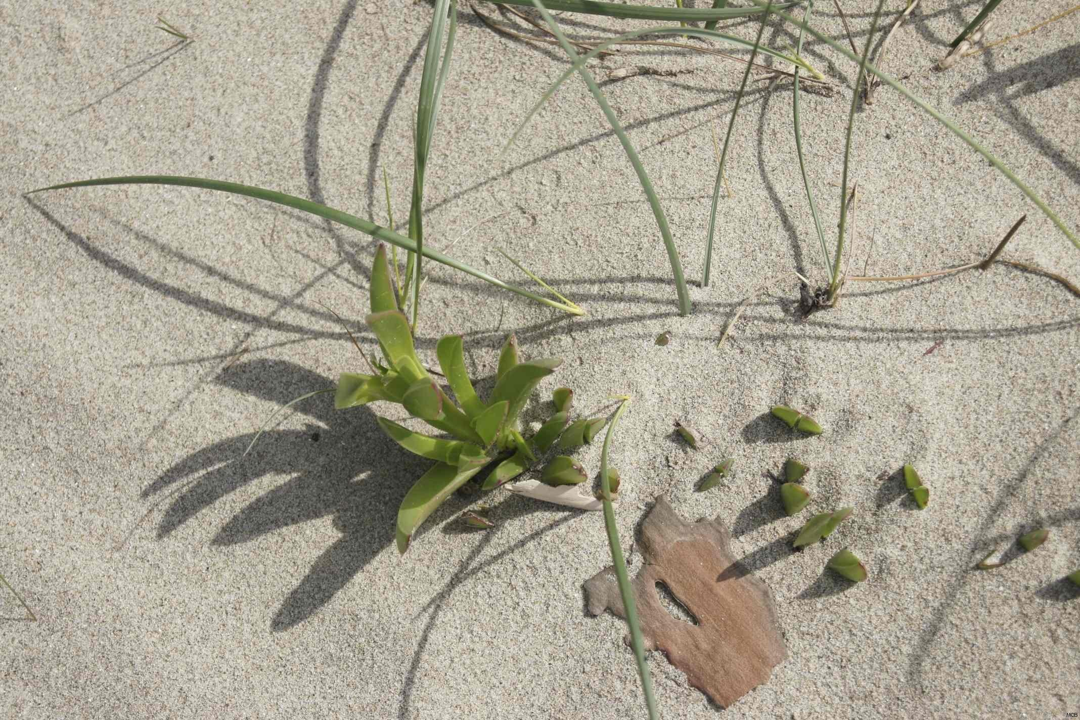 Ombre sur sable