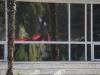 Fenêtre sur reflet rouge