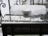 Cendrier face à l'hiver (2)