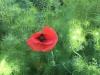 Rouge éblouissant