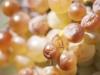 Raisins d'octobre