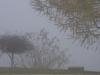 Brouillard sur érable