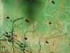Vert de rouille