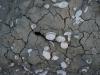Coquillages déposés sur sable sec