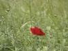Tache rouge