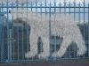 Ours blanc de Paris, sur un pont du 18ème arrondissement, 30 décembre 2014
